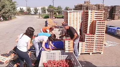 Russische Saftpresse – Moskaus Embargo trifft griechische Obstbauern