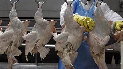 Zimbabwe, Namibia and Botswana ban South African poultry imports
