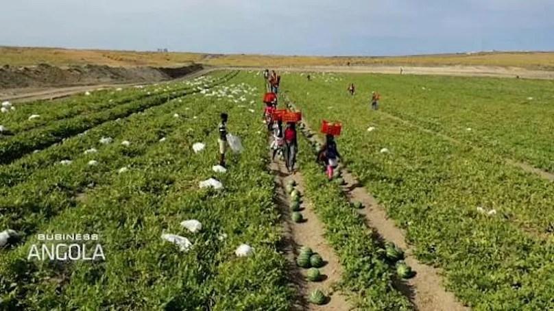 Kaundo Farm, Porto Amboim, Angola