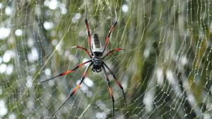 Scientists are discovering that spiders can create music with their webs