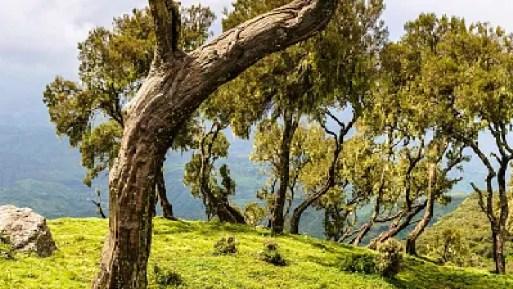 Ethiopians Are Planting Millions of Tree Seedlings