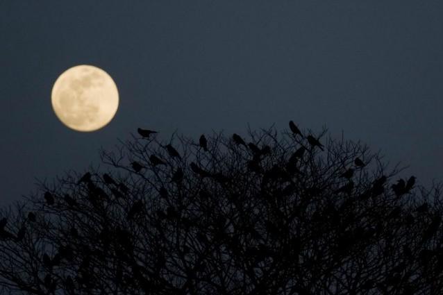 La Luna piena turba il nostro sonno (e non è una leggenda).