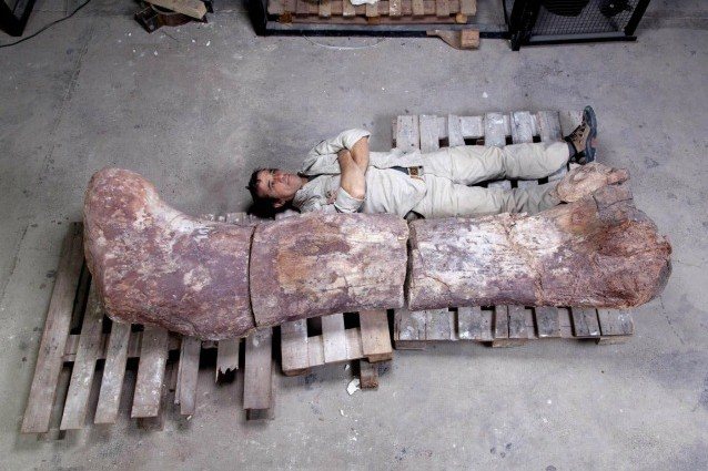L'animale più grande di sempre è un dinosauro.