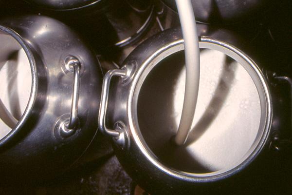 Penicillina nel latte indagato titolare di unazienda nel Torinese