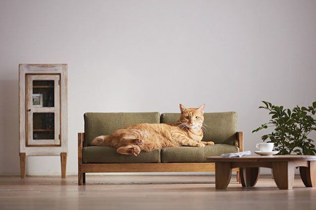 Lazienda concorrente di IKEA in Giappone lancia la sua linea di mobili per gatti