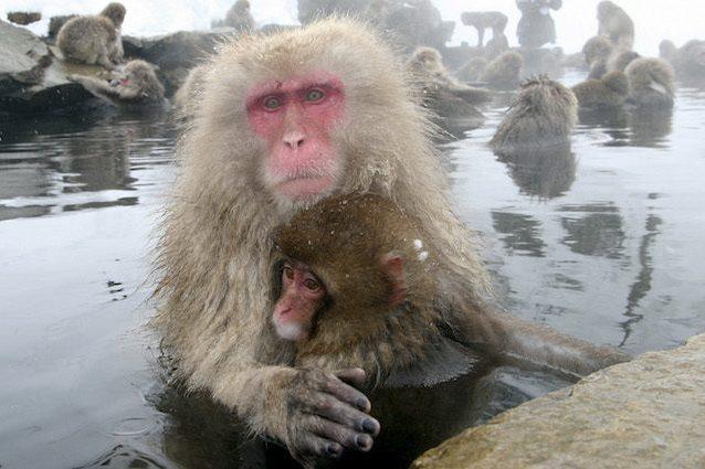 Test dei gas di scarico sulle scimmie Volkswagen Bmw e Daimler sotto accusa