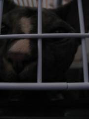 Uthello dans sa cage