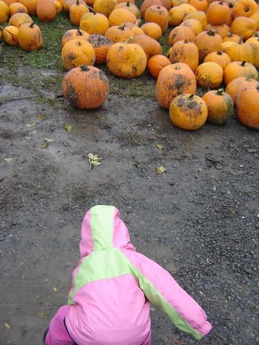 The Werner Ranch and Pumpkin Farm