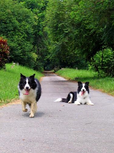 Enjoying my walk