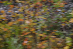 blurringoftheleaves
