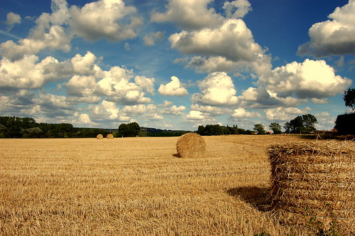 Hay Bails in Sunny France