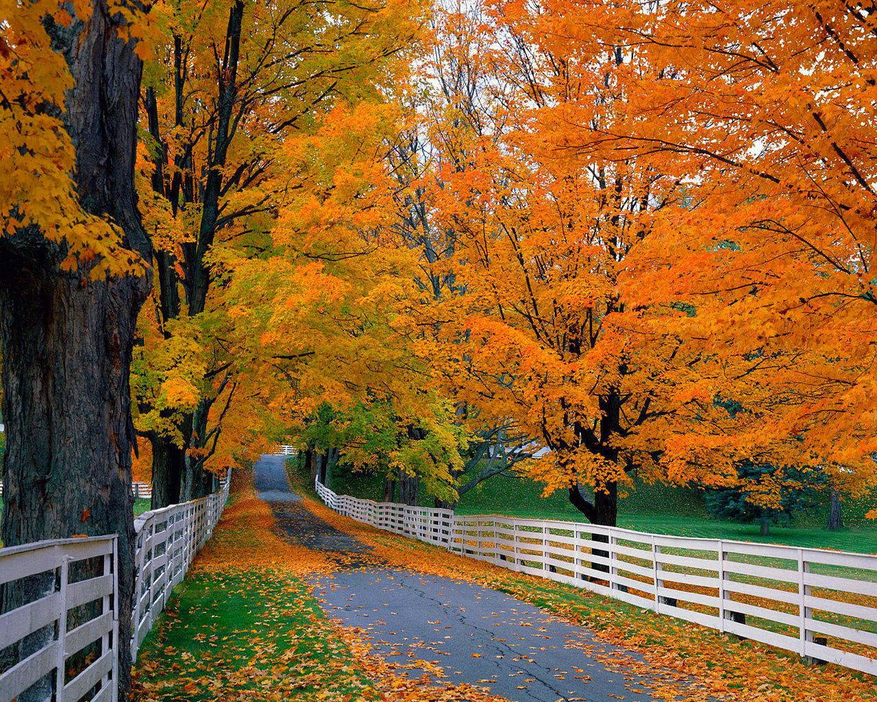 Free Autumn Leaves Wallpaper Download