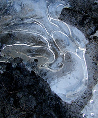 mud puddle ice