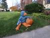 Booboo Contemplates a Pumpkin