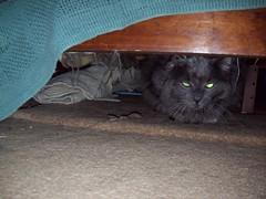 Duece Hiding Out