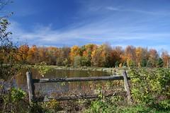 Pond IV