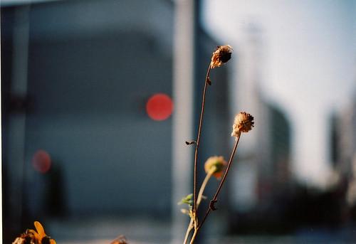 夏の終わり 2007