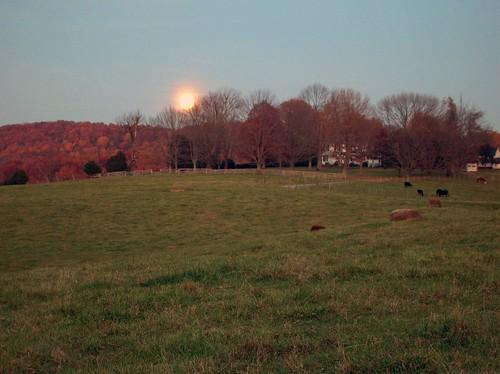 Rising Moon 4