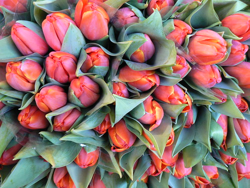 Tulips at the Dupleix Market