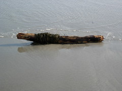 Driftwood and seaweed