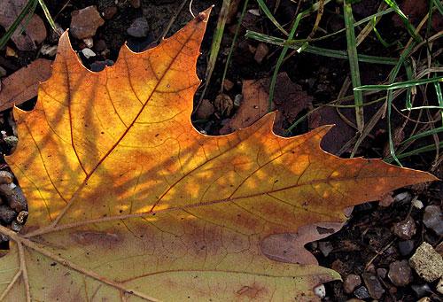 sun leaf grass