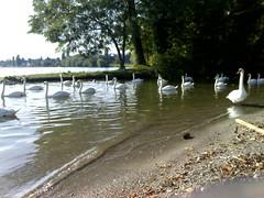 balade bord du lac oct 06 (15)