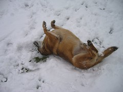 What dogs do in the snow