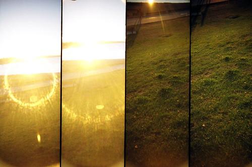 sun + grass