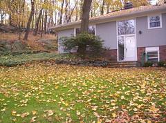 November 5 - Leaves 005