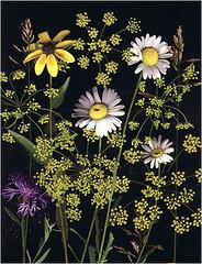 Eisener copier flowers