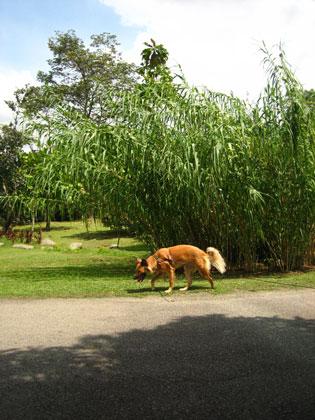 koda @ botanical garden