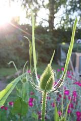 Trädgårdsvy i solnedgång