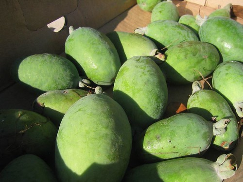 Feijoa in a box