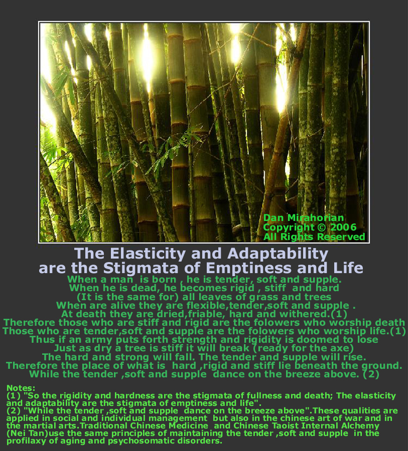 Lao Tzu 76: The Elasticity and Adaptability are the Stigmata of Emptiness and Life