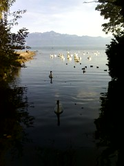 balade bord du lac oct 06 (20)
