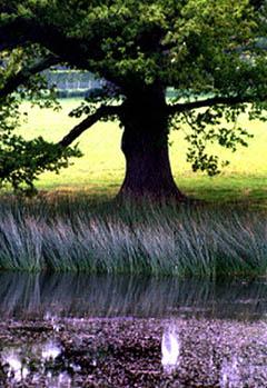 sissinghurst-lake