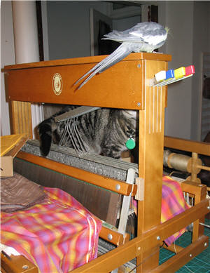 Chat et cockatiel