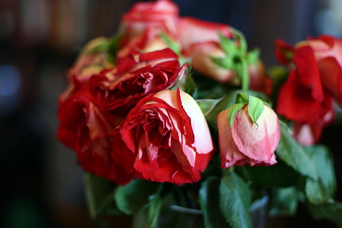 roses, even prettier on their way out