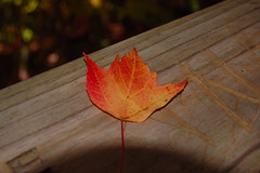 Single Leaf 2