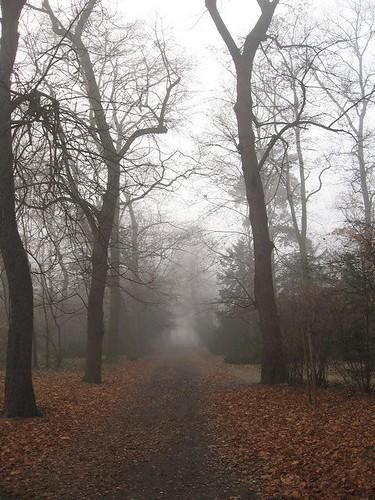 Mgła w Parku Szczytnickim (II)