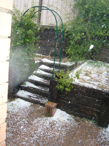 Hail building up like snow on steps in our backyard.