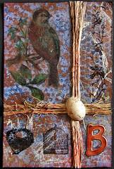 B, Bird