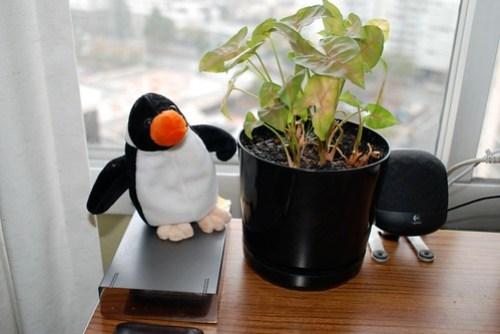 Penguin Plant