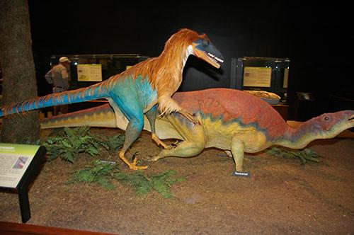 Museum of the Rockies - Deinonychus attacks Tenontosaurus