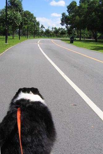 Sleigh dog in Singapore