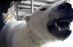 Zookeeper's Bear