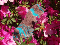 Here There Be Dragons Socks on Azalea