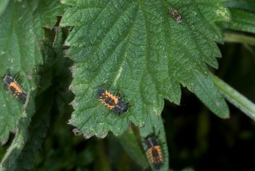 Allemaal larves