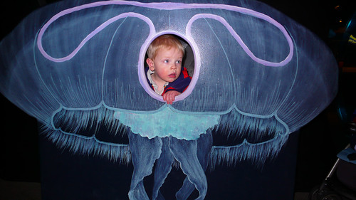 Alex the Jellyfish