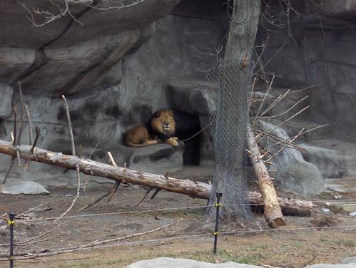 Det Zoo 123007_0124